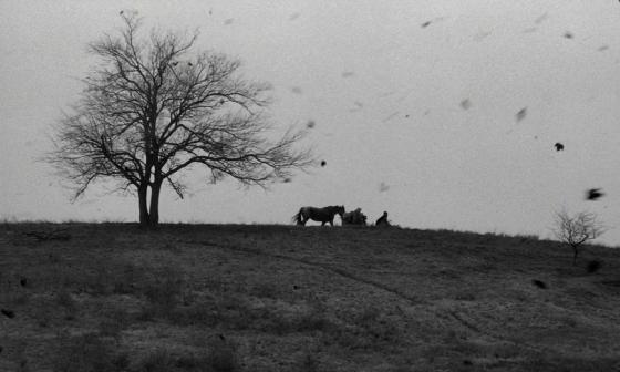 il cavallo di torino tarr recensione analisi lo specchio scuro fotogramma albero vento