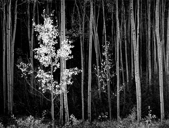Ansel Adams fotografia Masterworks from Seven Decades 1928–1982