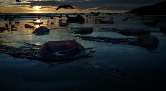 birdman medusa