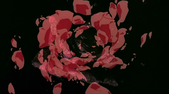 magnetic-rose-31