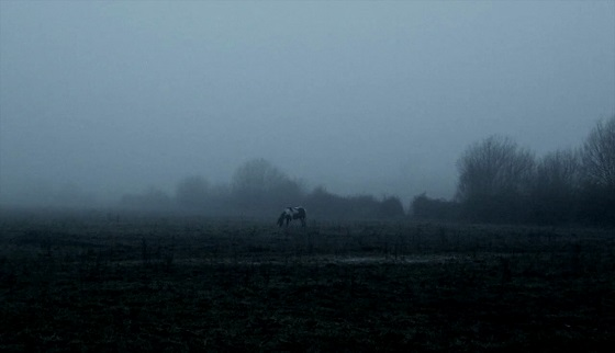 sleep has her house the ethereal melancholy of seeing horses in the cold scott barley recensione lo specchio scuro