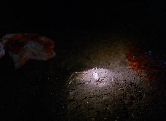 twin peaks specchio scuro - 4