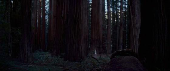 woodshock - 2