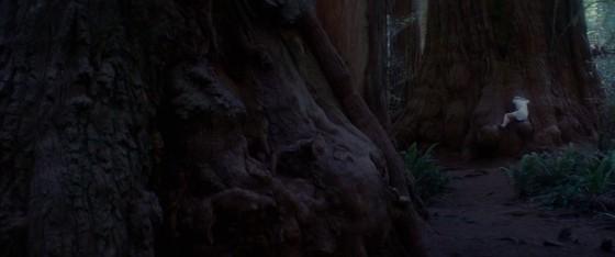woodshock - 3