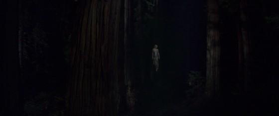 woodshock - 42