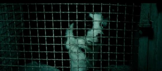 dogman - 24