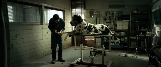 dogman - 5bis