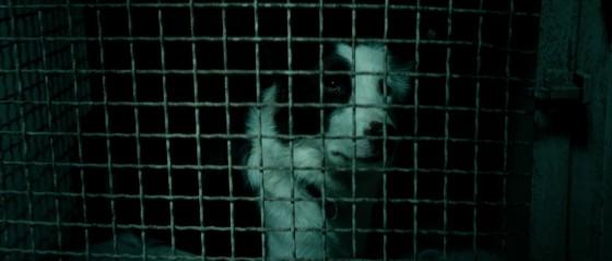 dogman specchio scuro - 18