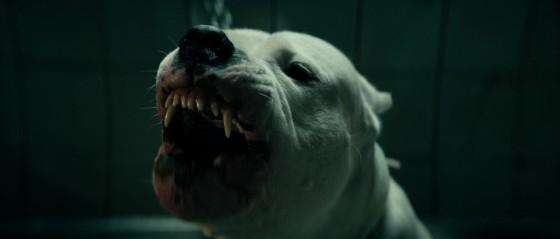 dogman specchio scuro - 7