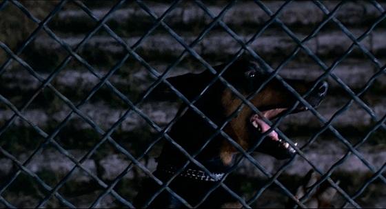 tenebre cane