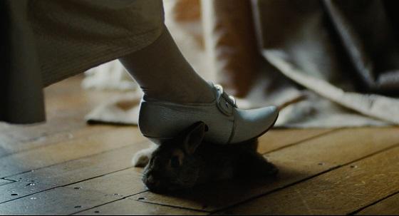 la favorita lanthimos conigli