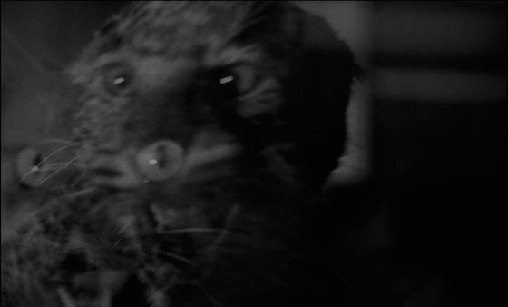la notte del demonio6