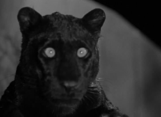 L'uomo leopardo - fig. 15